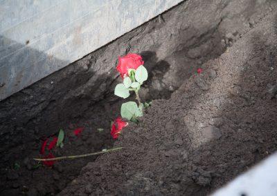 anna-groot-rozen-in-het-graf-1640