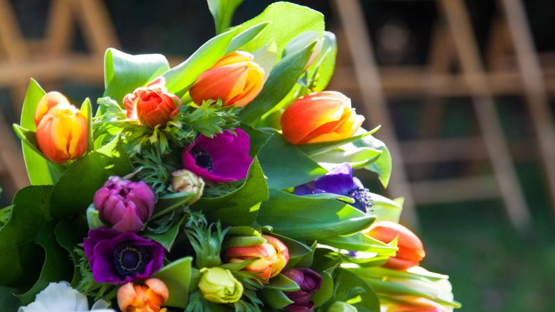 Tulpen & Troost